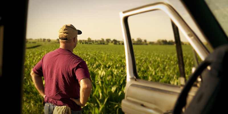 farmer looking at the field