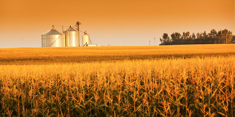grain marketing plans